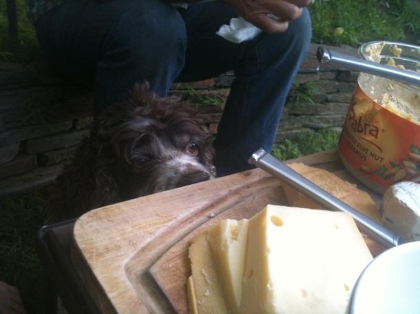 gluten-free dog
